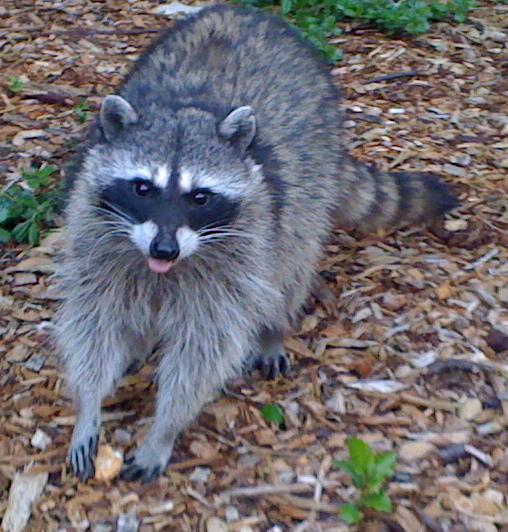 animal waste clean up minneapolis | pet odor removal minnesota | on call bio minnesota